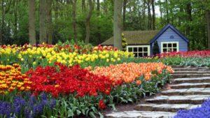 jardin-con-flores-de-colores